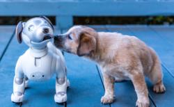 AIが人間を超える時?
