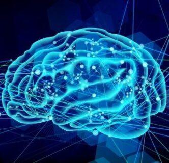 脳が学習する仕組みってご存知?